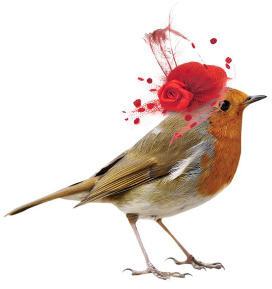 MSFV Bird Red Bowler